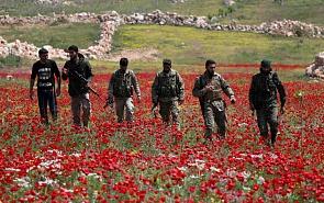 Война, экономика, политика в Сирии: разорванные звенья