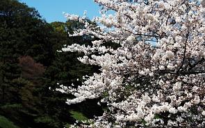 Япония прощается с комплексом вины? Почему Токио решился на симметричный ответ Сеулу